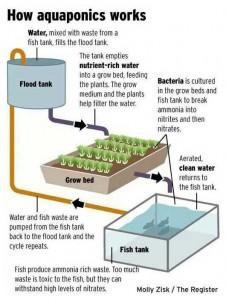how-aquaponics-works