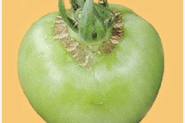 boron-deficient-fruit
