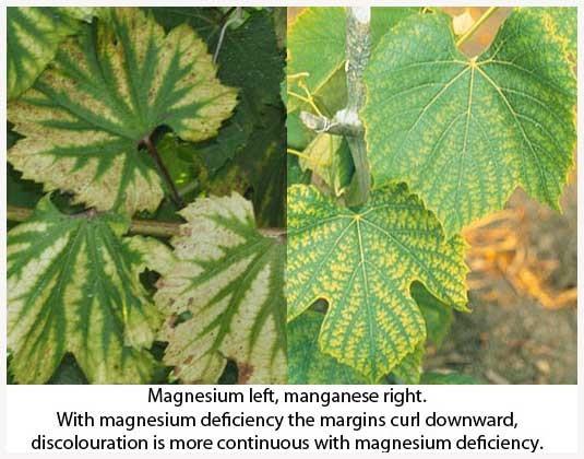 manganese-magnesium