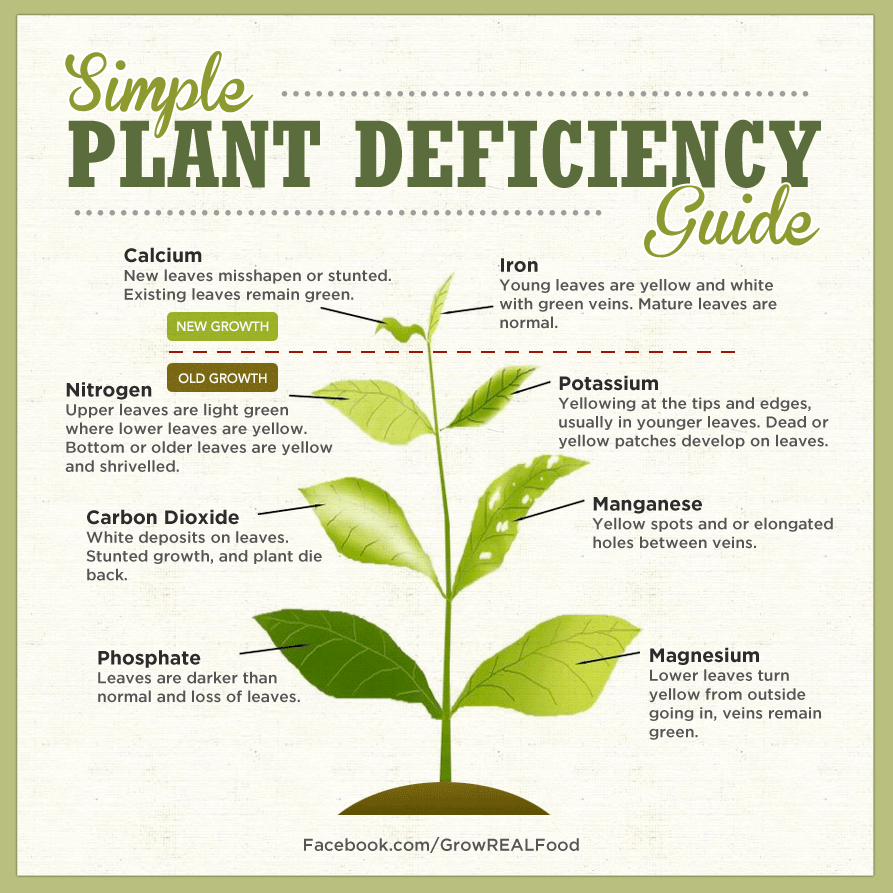 simple-plant-deficiency-guide