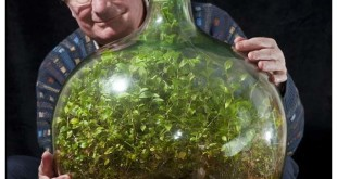 david-latimer-terrarium