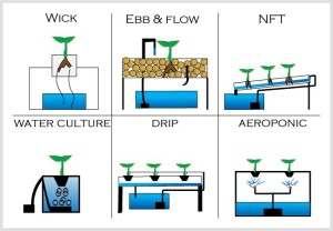 sistem-hidroponik