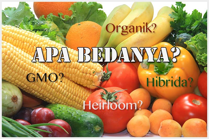 orgaik-heirloom-hibrida-gmo